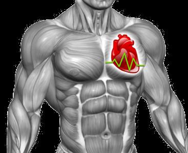 Cardio_int